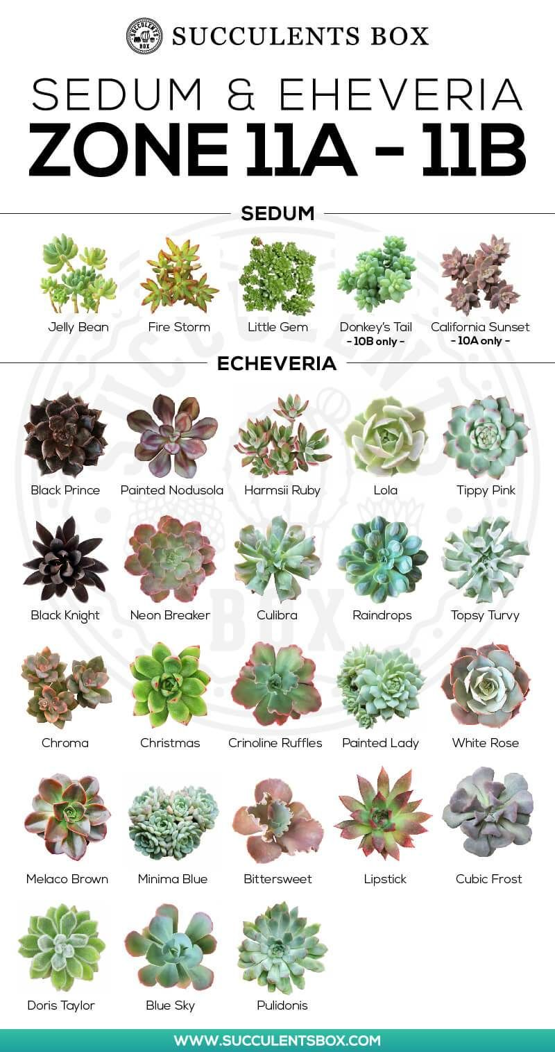CHOOSING SUCCULENTS FOR ZONE 11 & 12 - HAWAII AND PUERTO RICO