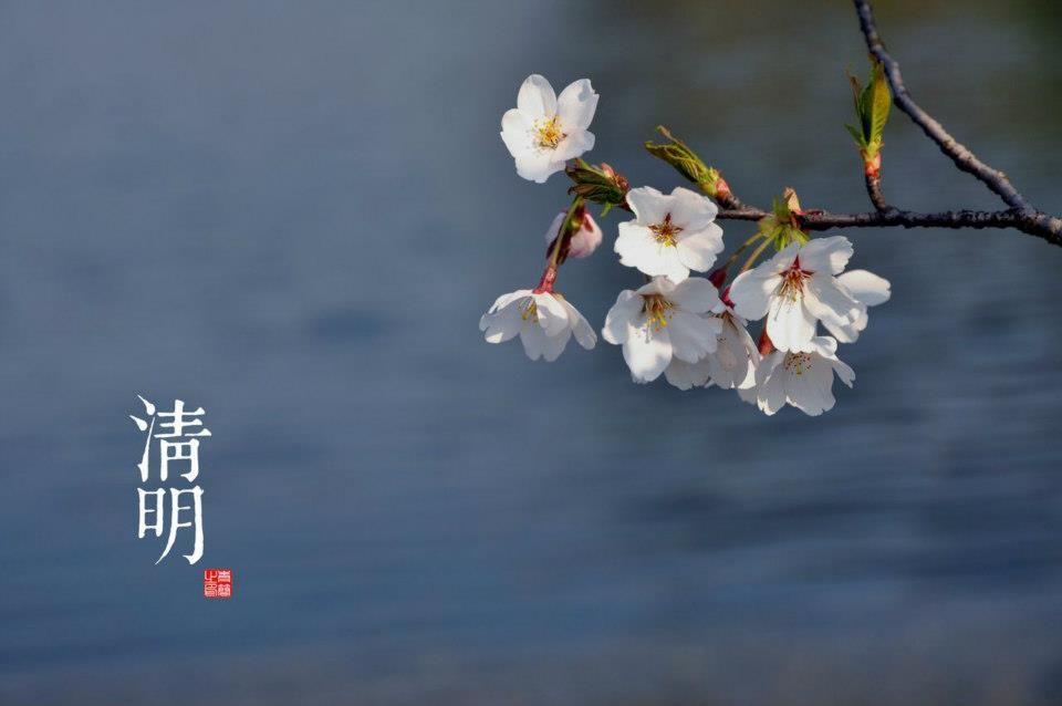 Finalment, arribarà la primavera? Flors d'ametllers que floreixen