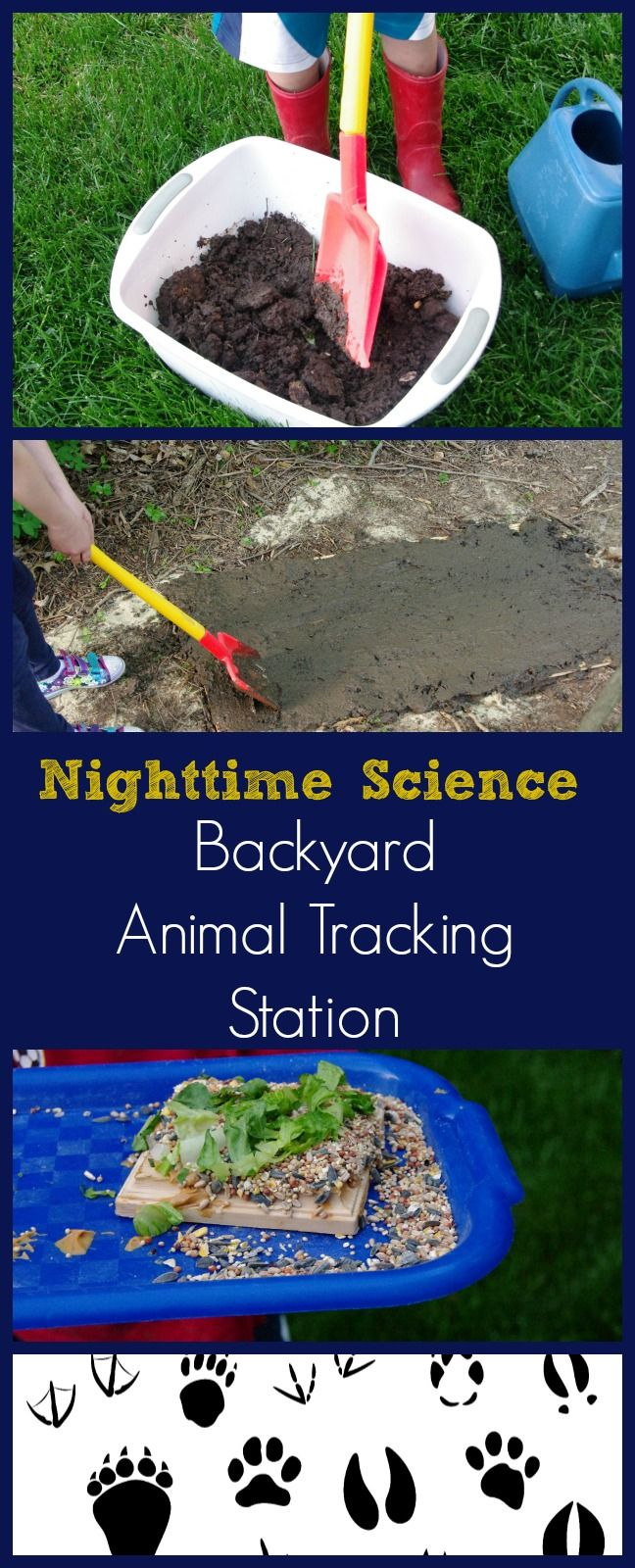 Cool Science Experiments Back Yard Animal Tracking