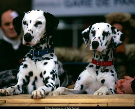 Pictures Photos From 102 Dalmatians 2000 Dalmatian Puppy Dalmatian Dalmatian Dogs