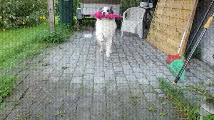 Doggy Umbrella Dance
