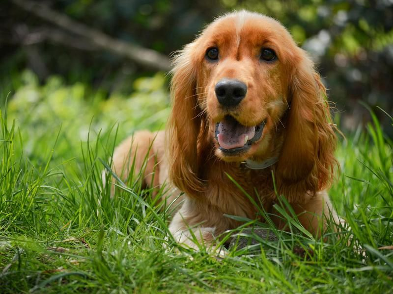 40 Dog Breeds Who Belong With Kids Of Any Age Sobaki