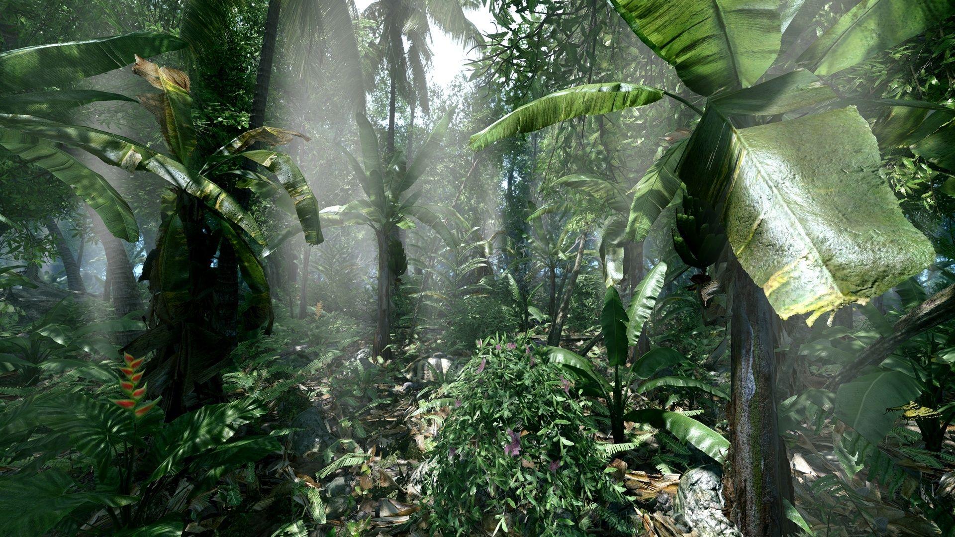 фото джунглей на рабочий стол можно приступить