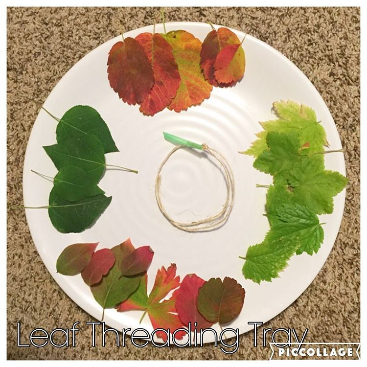 Leaf Threading Tray {I'm so excited about these gorgeous leaves we found in the mountains today! And I saw this activity on @three_busy_boys account and had to try it out! (Straw is cut at an angle so it will pierce the leaves but not little fingers!)}  . . . . #preschoolwithmommy #preschoolathome #natureactivity #naturecraft #toddleractivity #toddleractivities #natureplay #natureart