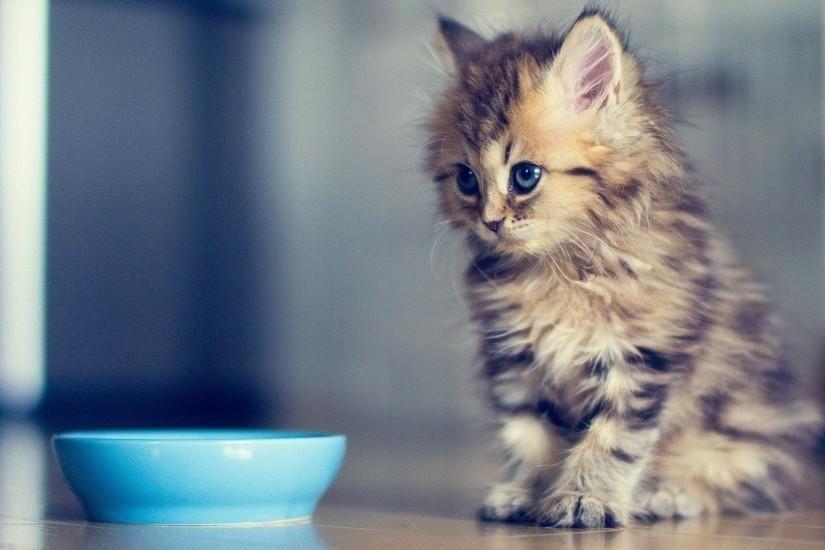 Funny Kitten Wallpaper 8811184 Kittens Cutest Cute Kittens Images Cute Baby Animals