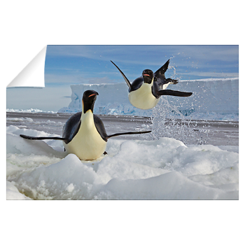 An airborne emperor penguin at edge of ice floe > National Geographic Art Store