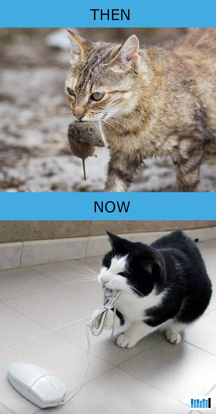 Then Vs Now How Cats Lives Changed Because Of Technology 15 Photos Kitten Breeds Cats And Kittens Cute Animal Memes