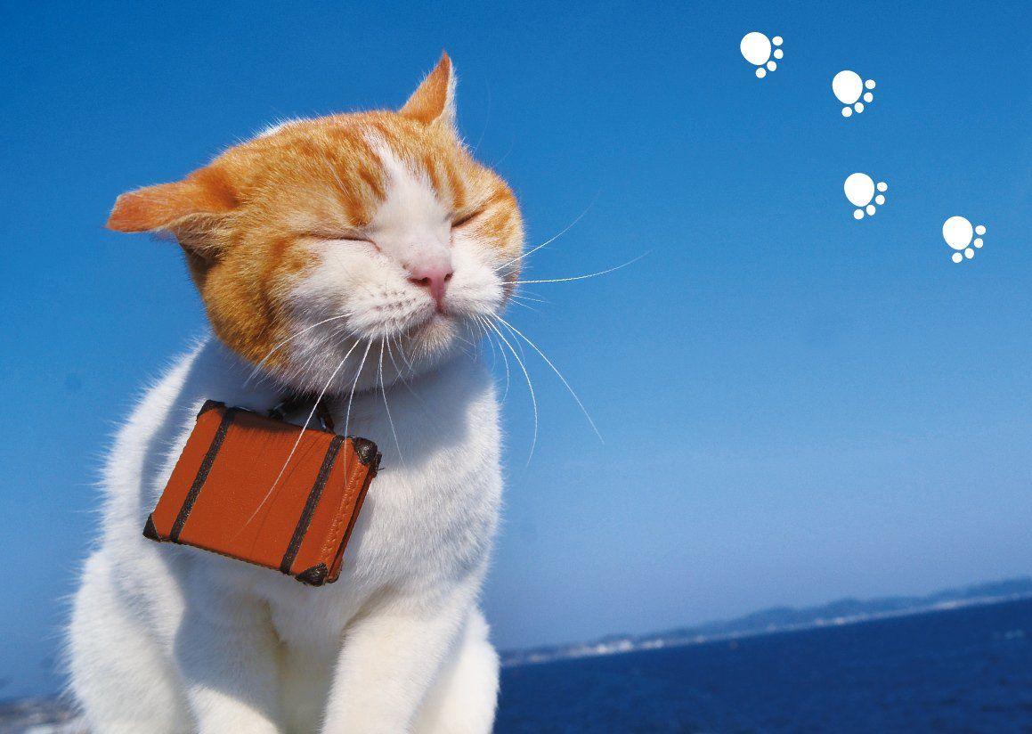 にゃらん(nyalan_jalan)さん Twitter キュートな猫, 猫の愛, 茶トラ猫