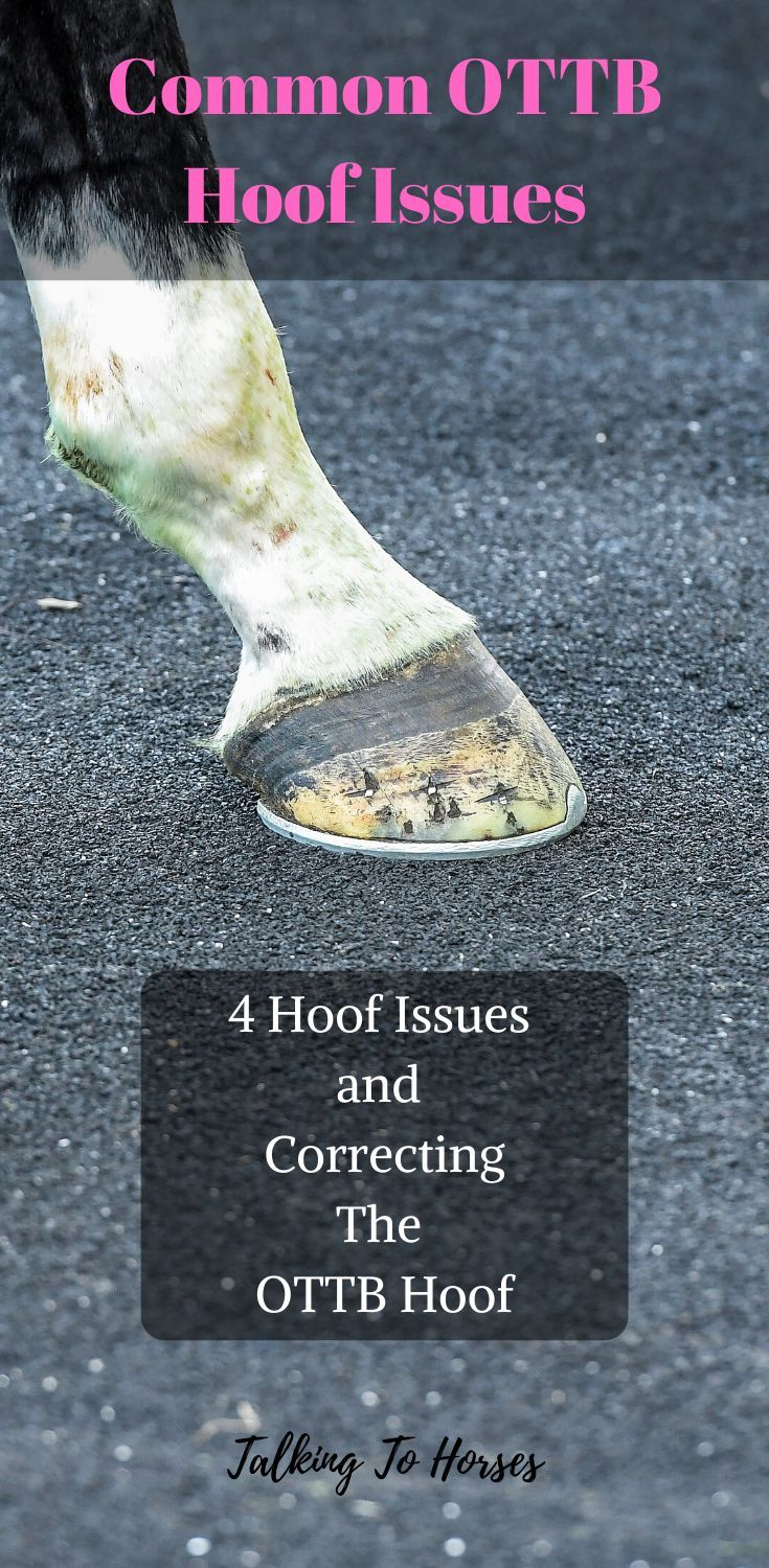 4 Hoof Issues and Correcting the OTTB Foot in 2020 (With
