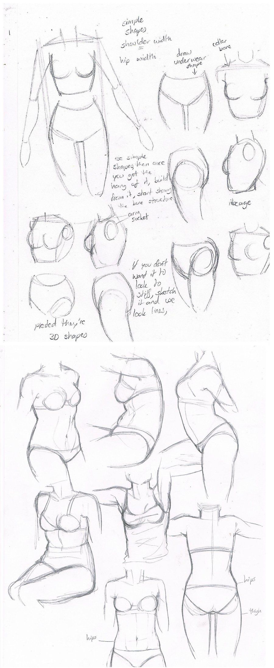 Today\'s Drawing Class: Drawing the Female Body   female body torsos ...