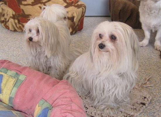 125287 Jpg Mit Bildern Tiervermittlung Kleine Hunde Hunde