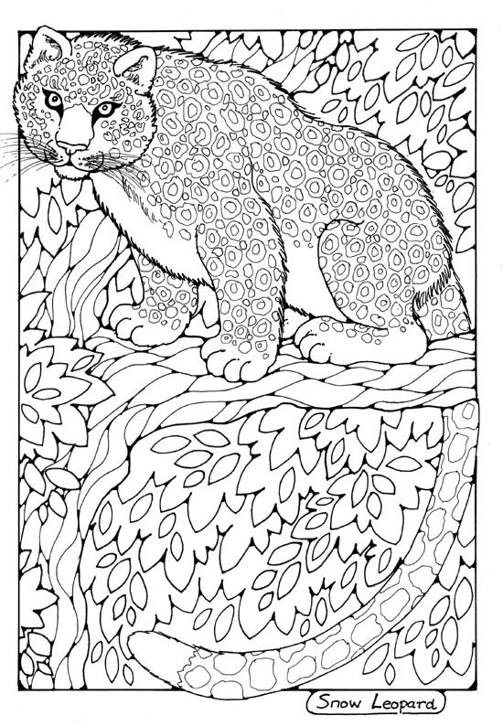 snow leopard colouring page by dandi palmer