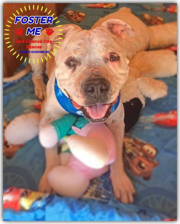 Meet Ralphie an adoptable pet Dog Pets, Pet dogs