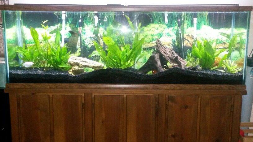 Our 125 Gallon Oceanic Aquarium   Freshwater Aquarium   125 gallon
