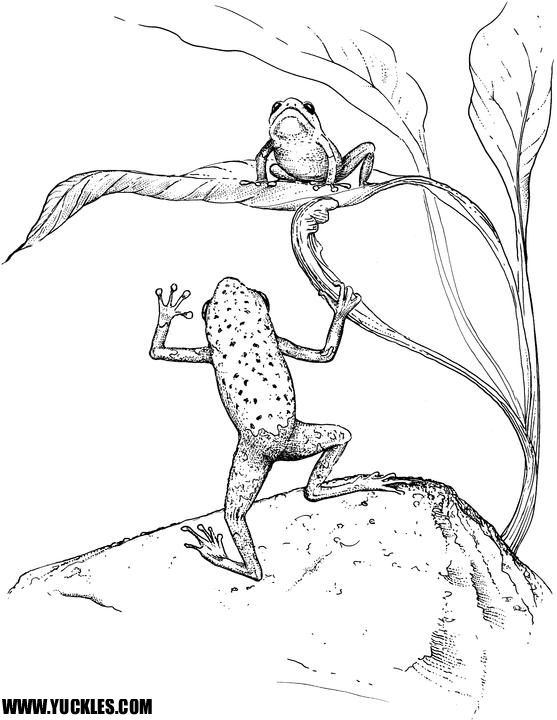 Tree Frog Coloring Pages   Coloring   Pinterest   Tree frogs, Frogs ...