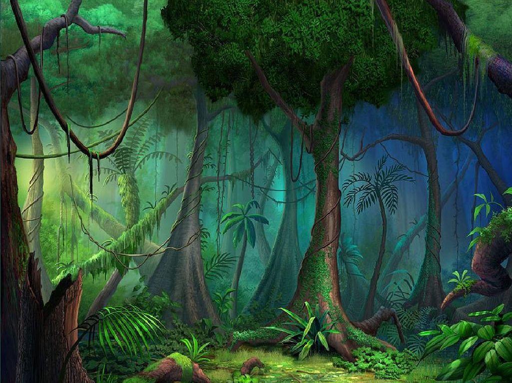 Blog Do Voinho Conhecendo A Floresta Amazonica Floresta