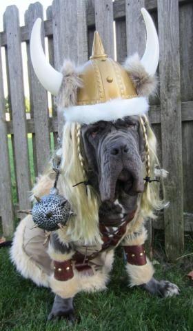 Halloween Costumes For Mastiffs