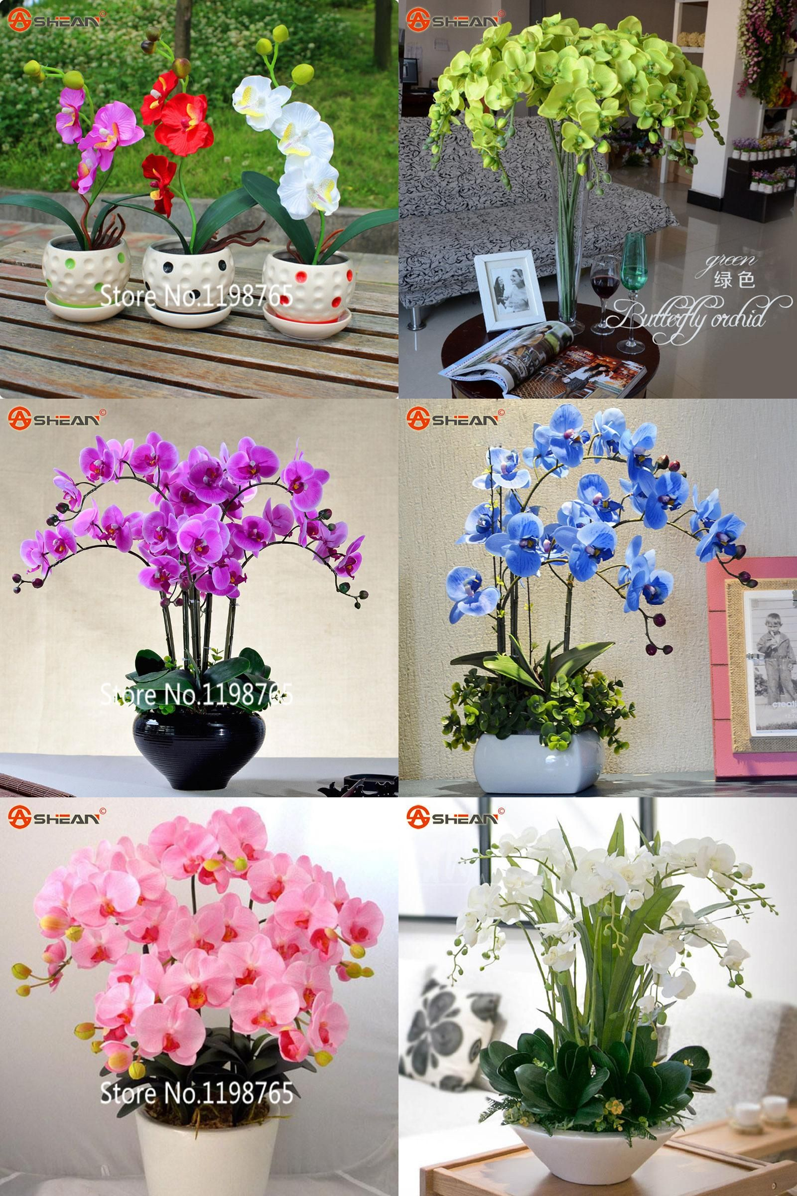 Visit to buy new arrival pcs phalaenopsis orchid seeds