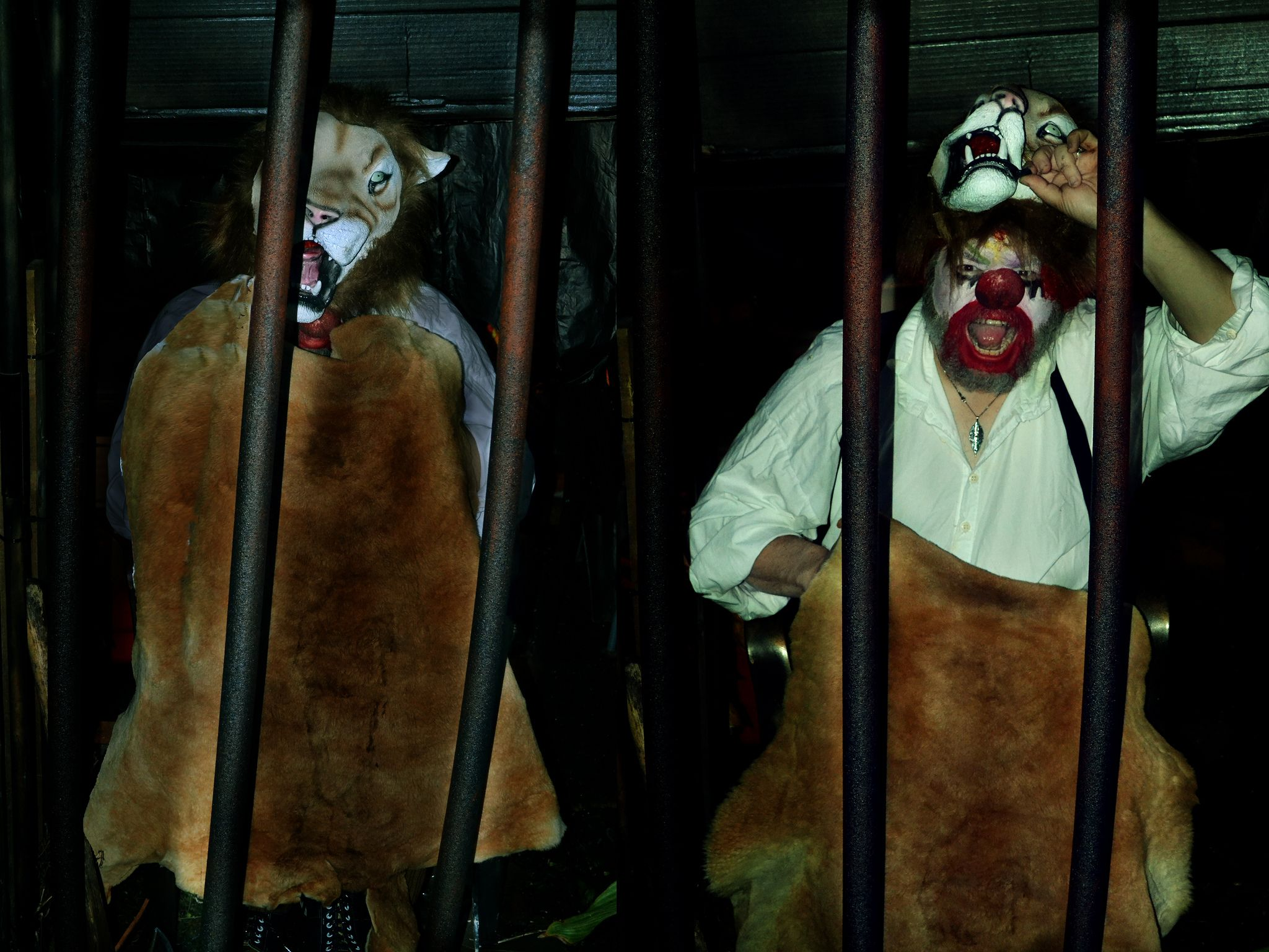 "https://flic.kr/p/hbkKw7 | Not Lion | ""Y'all think I'm a Lion? I""M NOT A LION! I""M BEAUX BEAUX THE CLOWN AND I""M GONNA MAKE YOU A CLOWN TOO OR CHOP YOUR HEAD OFF!"" I had a double headed axe under that fur. and the bars were pipe insulation. When I burst out, people scattered in all directions, dropped candy, dragged kids, and peed themselves. It was our best All Hallows E'en show ever. Had a great cast and crew! We had people lined up to go through even in the rain. ..."