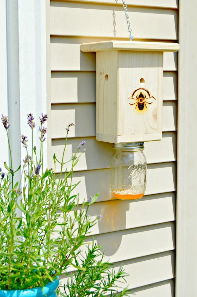 How To Trap And Kill Carpenter Bees And Wasps Too Mom 4 Real Wood Bees Kill Carpenter Bees Wood Bee Trap