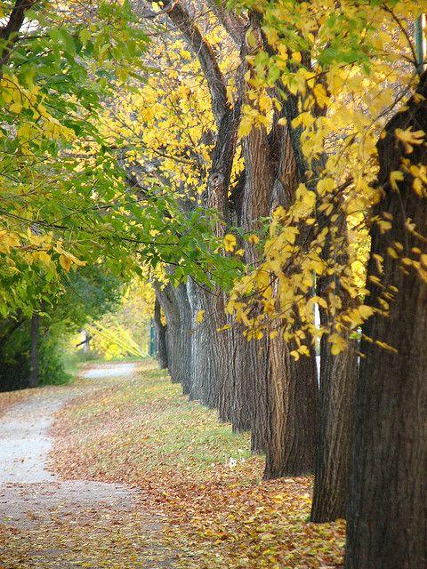 Meewasin Trail - Saskatoon, #Saskatchewan. I walk this trail with my family all the time. Sooooo beautiful!