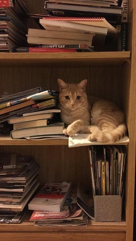 She can make any messy bookshelf look aesthetic