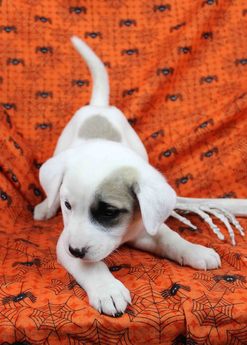 Adopt See Ya on Dogs, Cute puppies, Beautiful dogs