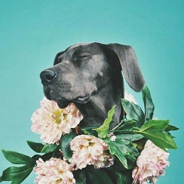 Instagram regram: dog with flowers, hibiscus