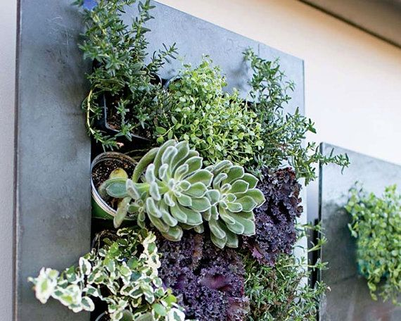 Planter succulent planter wall planter hanging by for Indoor succulent wall
