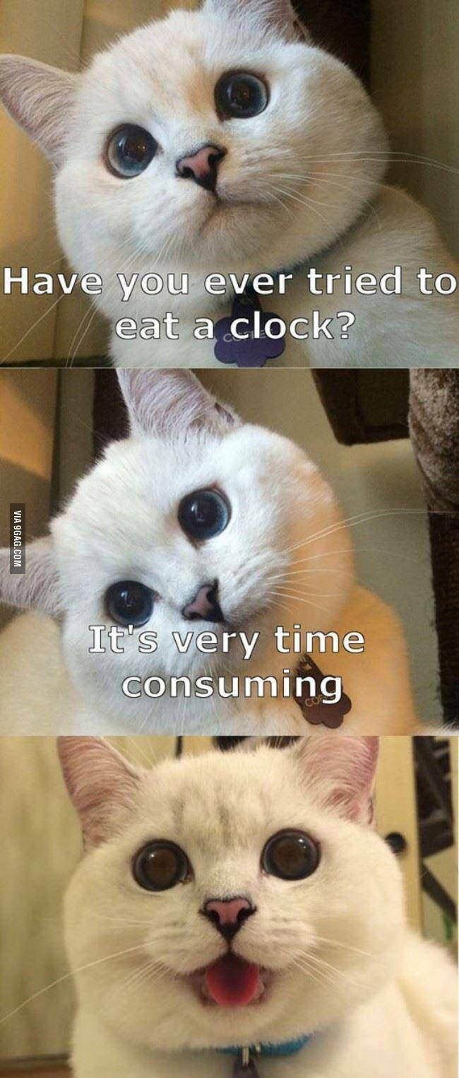 24 Cat Puns That Will Make Your Day Funny animal memes