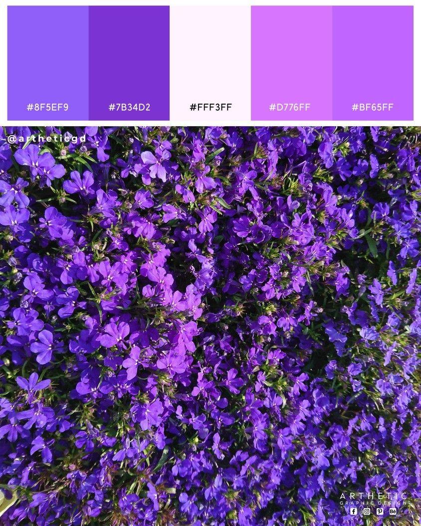 Purple Lobelia Flowers Color Palette This Lovely Flower Shot