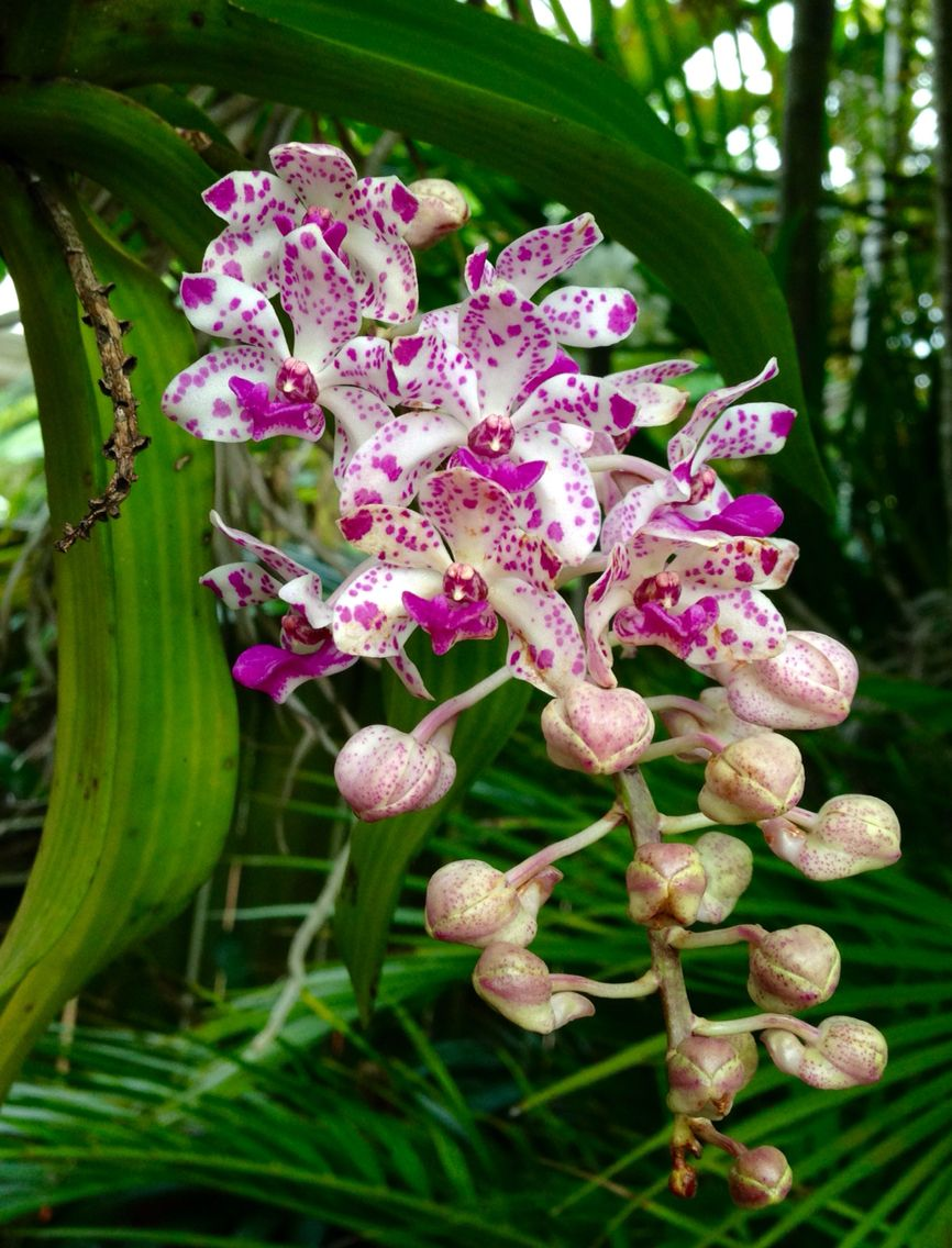 Orchid orchids and more orchids pinterest orchid