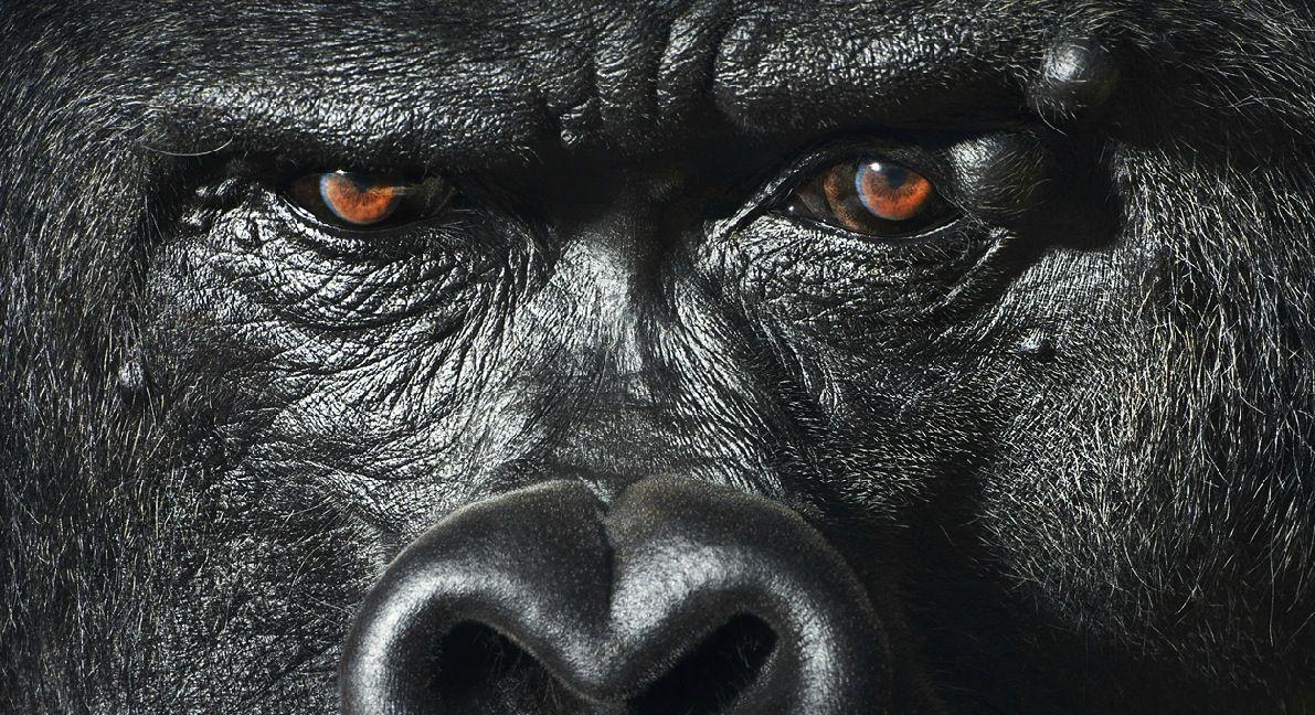 Obrazom: 50 najúžasnejších portrétov zvierat | Dobré noviny