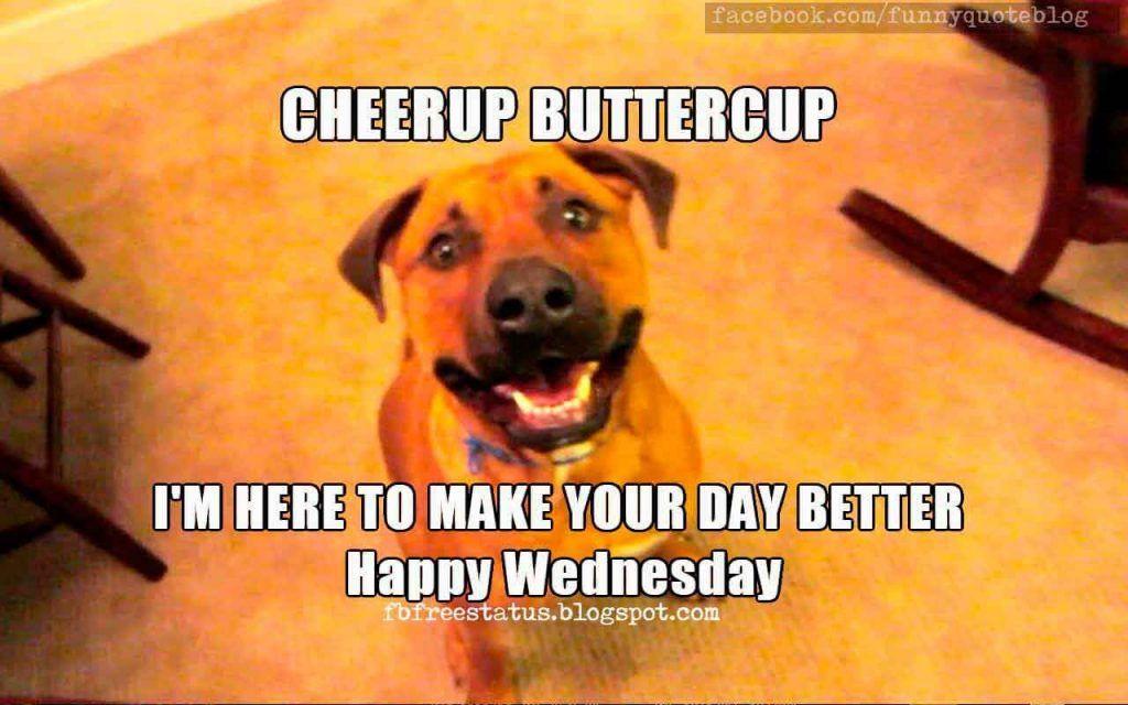 Top 18 Happy Wednesday Memes Happy Wednesday Quotes Funny Wednesday Quotes Wednesday Quotes