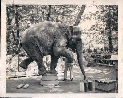Lo zoo dei Giardini Pubblici di Milano Milano italia