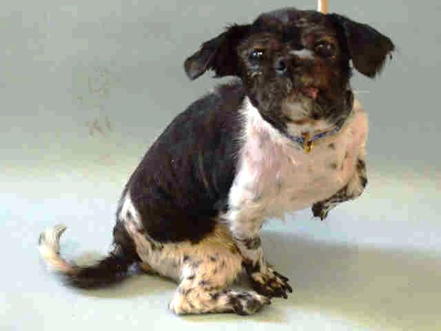 Pin By Urgent Pets On Death Row On Dog Daily Posts Shih Tzu
