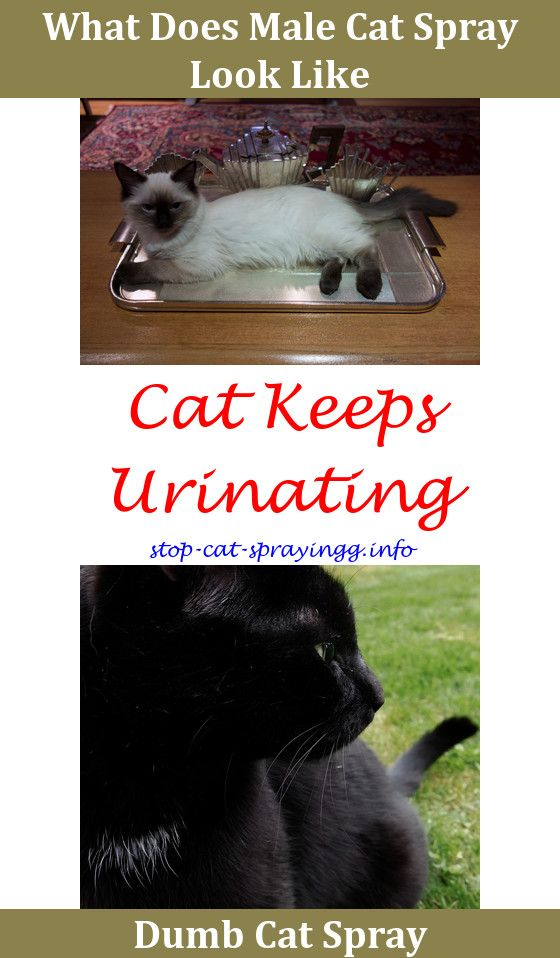 Cat Scratching Furniture Spray Homemade Will Just Elsewhere Urine Crystals Smarty