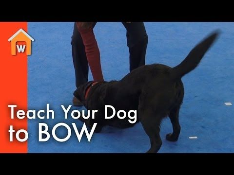 Looking For A Fun And Impressive Trick To Teach Your Dog Try The