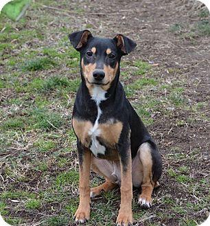 Norwalk Ct Manchester Terrier Mix Meet Lenny A Dog For Adoption Dog Adoption Terrier Mix Manchester Terrier