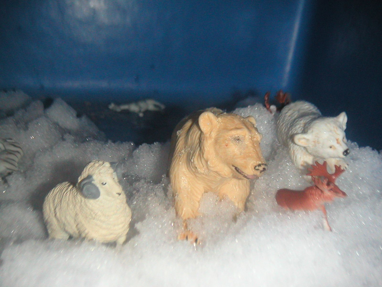 Animals in Winter Song     Some animals in winter   sleep, sleep, sleep.     Some animals in winter eat, eat, eat.     Some animals in winter fly away...     What does this animal do?     Use winter animals puppets and pull out a different animal each time you sing it.                  Labels: animals, science, winter