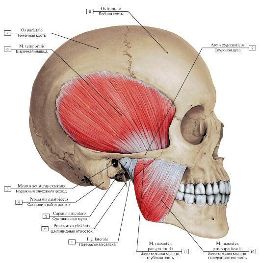 Medicina regenerativa a cartilajului | cooperativadaciaunita.ro