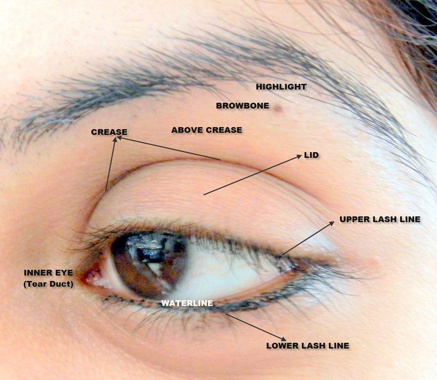 Detailed eye diagram for makeup tricks of the trade pinterest detailed eye diagram for makeup ccuart Choice Image