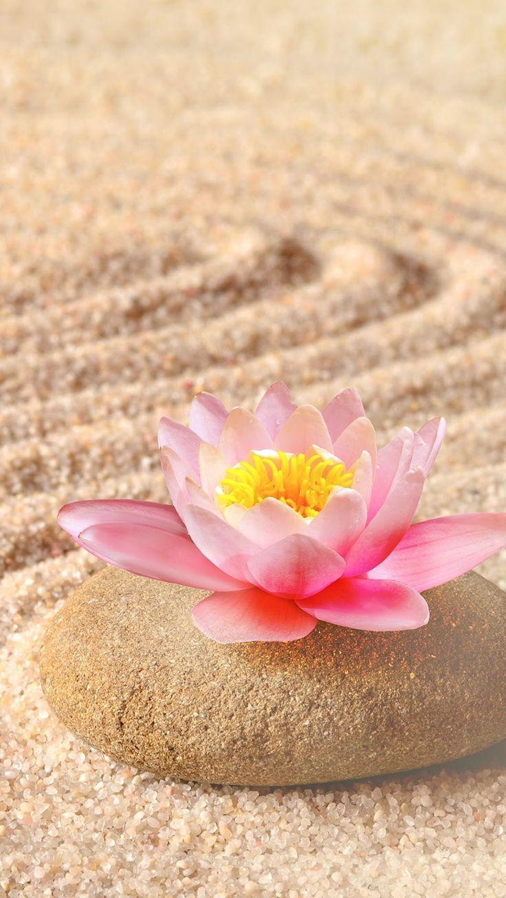 Luciana Brux Brux Luciana Fond D Ecran Telephone Fond Ecran Zen Comment Dessiner Une Fleur