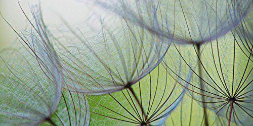 Glas - Bild Artland Wandbild Blumen Pflanzen Fotografie Anette - wandbilder für die küche