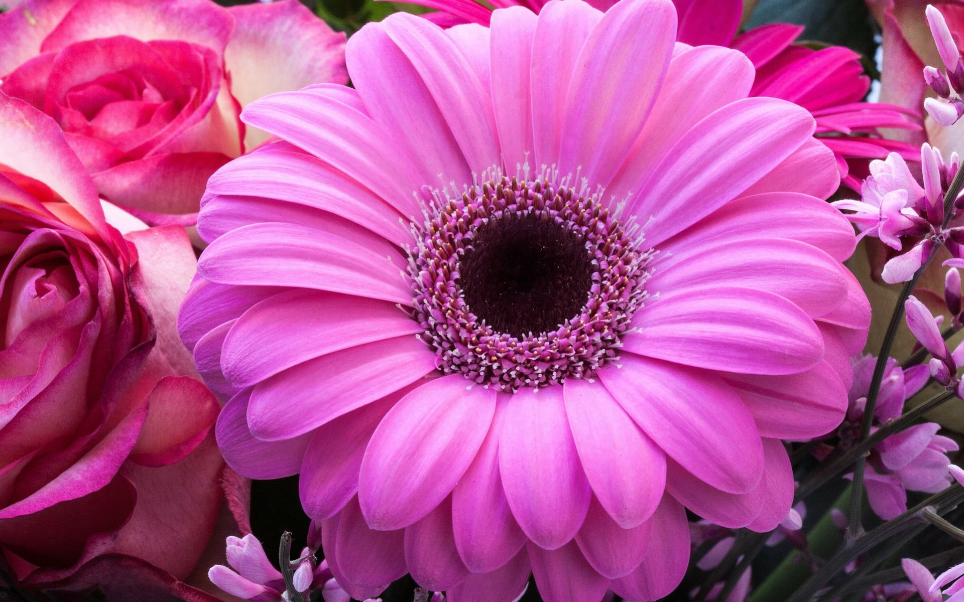 fond d'écran hd : fleur rose | fond d'écran hd gratuit - http