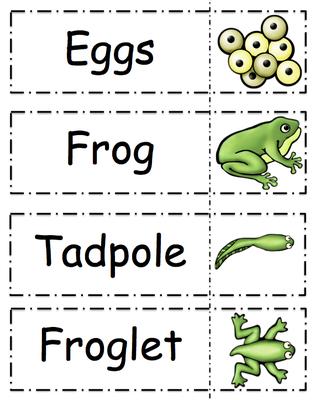 Geeky image for frog life cycle printable