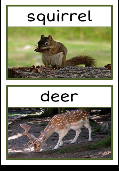 Forest Animals Photo Set Treetop Displays EYFS, KS1