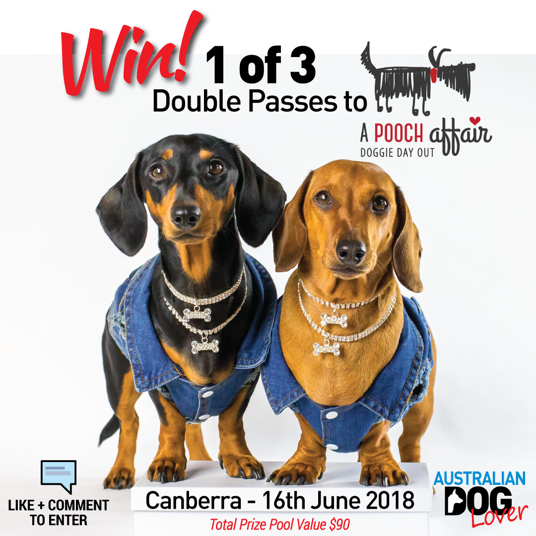 Competitions Dogs Day Out Competition Giveaway Dog Lovers