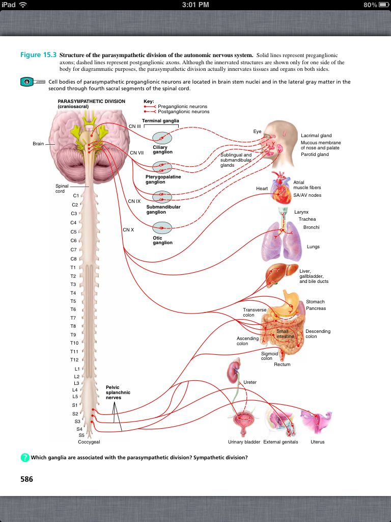 Principles of anatomy and physiology chapter 15 the autonomic explore autonomic nervous system and more robcynllc Choice Image