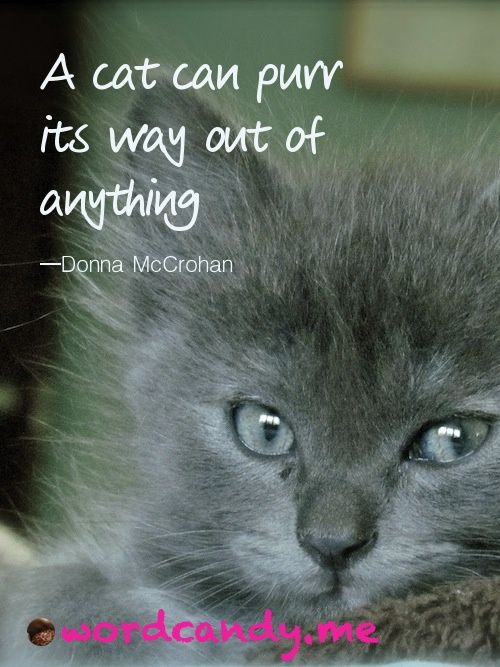 A Cat Can Purr Its Way Out Of Anything Photo By Susan Etole Cat Quotes Cats Animal Quotes